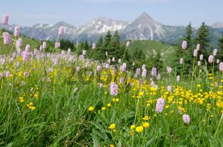 Bergweise mit Gras, Blumen und Blüten