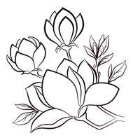 Magnolia Flowers Contours