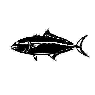 Greater Amberjack Seriola Dumerili Medregal Coronado Allied Kingfish Greater Yellowtail Mascot