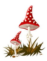 Mushroom with a red cap