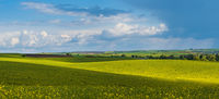 Spring evening view with rapeseed yellow blooming fields in sunlight with cloud shadows.