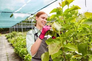 Gärtner Lehrling kontrolliert Wachstum der Pflanzen