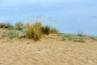 Sand dunes near the beach