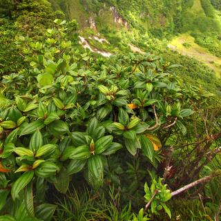 Saint Kitts Tropical Vegetation