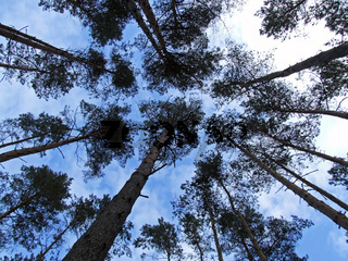 Baumwipfel / treetops