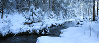 Wintery trees along a small creek in the Swiss Alps.