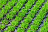 210610-219 Rasengittersteine Gras Rasen.jpg