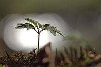 Light reflections and plant