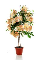 Money tree isolated over white background.