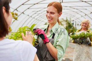 Gärtner Azubi und Kundin mit einer Pflanzenzüchtung