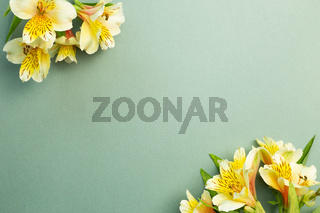 Yellow Alstroemeria flowers frame on green background. floral decoration. flat lay, top view, copy space