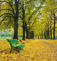 Bench autumn alley park fall