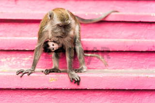 Monkey in a temple complex in Malaysia