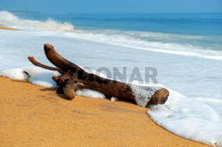 Branch is washed by waves on a tropical beach