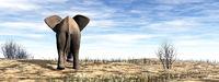 Elephant standing in the desert - 3D render
