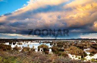 cloudscape over swamp