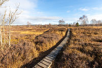 Boardwalk thought the moorland of the high fens in Belgium