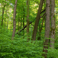 Woodland in Hainich National Park, Thuringia, Germany