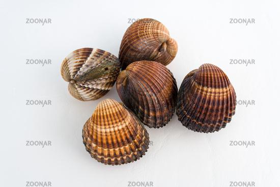 Tasty freshly caught shellfish