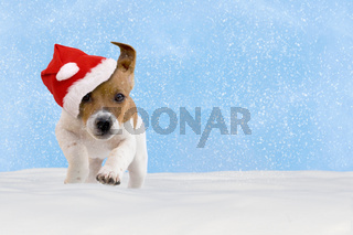Dog, puppy, Jack Russel Terrier with santa hat jumping in the snow