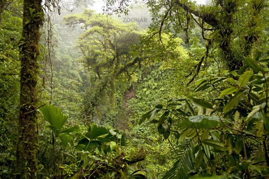dense vegetation in the rainforest of the national park volcano Arenal near the place La Fortuna