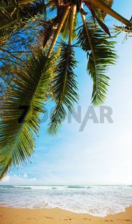 Tropical beach in sunny day. Vertical composition.