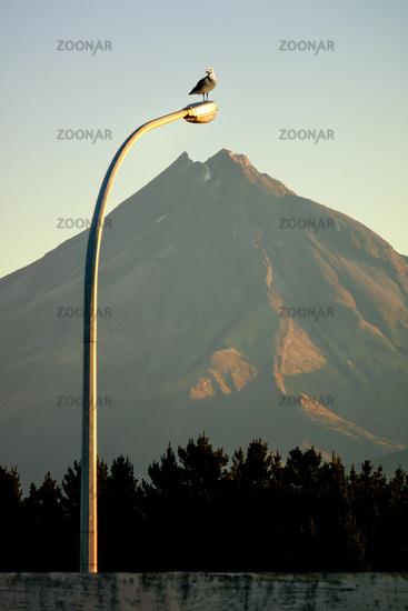 Mt. Taranaki with street light