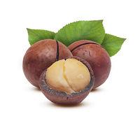 Macadamia grain and nuts