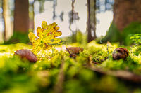 Natural light falls into a autumn forest with a heart shaped leaf and a growing mushroom as concept for the wonderful colored fall season.