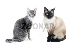 2 junge Katzen