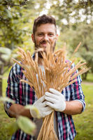 Farmer with bunch of ripe wheat