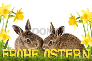 two easter bunny