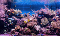 Animals of the underwater sea world. Ecosystem. Colorful tropical fish. Life in the coral reef