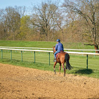 Horse and rider training on the racecourse near Magdeburg