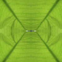 Green symmetrical abstract