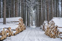 A pile of wood covered with snow. Winter coat, forest path and a pile of coniferous wood next to it. Season winter. Focus mainly on foreground.