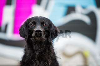 Black dog with colorful background