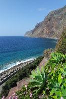 Drachenbaum Agaven vor Steilküste , Madeira