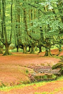 Otzarreta Beech Forest, Gorbeia Natural Park, Spain