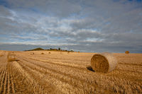 Bales of straw on a farm field