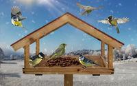 Native bird species in the bird house while feeding