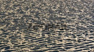 Wattenmeer vor einem Sandstrand an der Nordseeküste in Sankt Peter-Ording