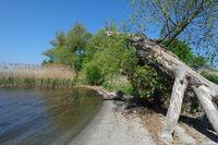 Spring on the Odra Lagoon