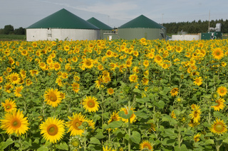 Biogasanlage mit Sonnenblumenfeld