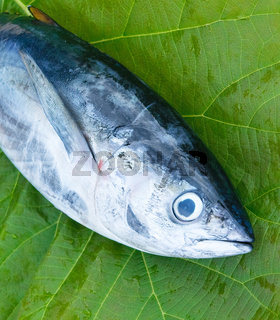head of tuna fish