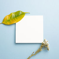 White memo pad with dry flowers on blue background. top view, copy space