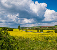 Spring rapeseed yellow blooming fields