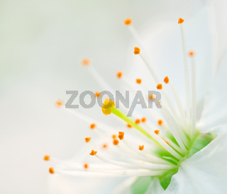 constellation flower