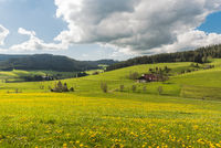 Landscape in Black Forest with flower meadow and traditional farm house, Baden-Wuerttemberg, Germany