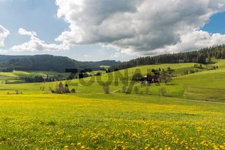 Landschaft im Schwarzwald mit Blumenwiese und traditionellem Bauernhof, Deutschland